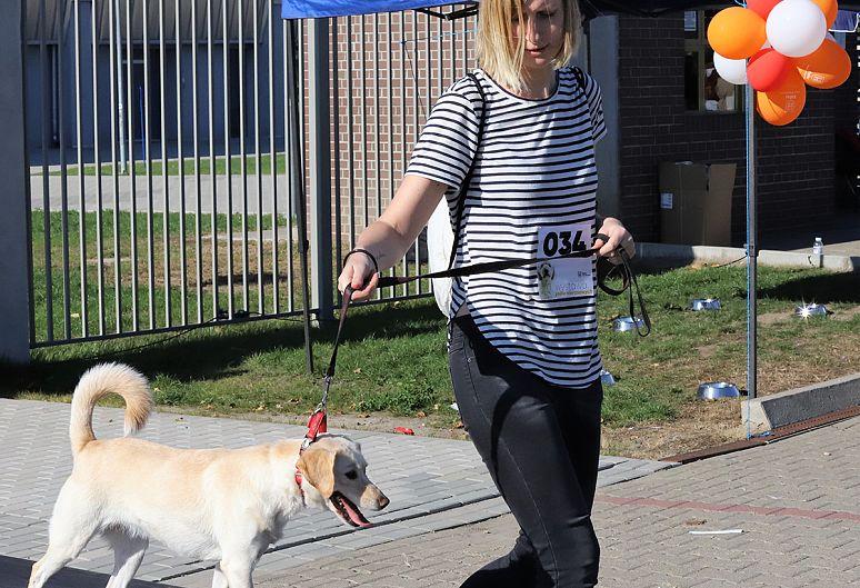 pierwsza wystawa psów nierasowych, Kalisz 2018