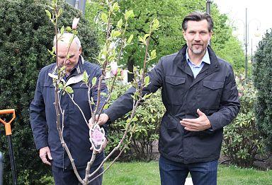 magnolie_9.jpg